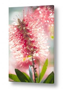 פרחים פרחים | פרח אור