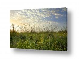 איה אפשטיין איה אפשטיין - צילומי טבע אומנותיים - פרחים | אביב