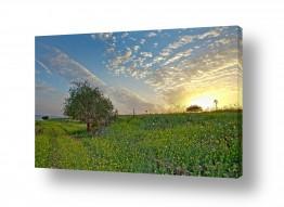 שדה ירוק ירוק | דרך השדה