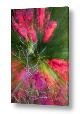איה אפשטיין איה אפשטיין - צילומי טבע אומנותיים - פרחים | מסיבת צבע