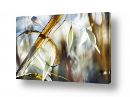 איה אפשטיין איה אפשטיין - צילומי טבע אומנותיים - צמח | שיבולת מס.3