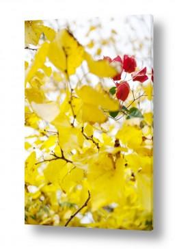 איה אפשטיין איה אפשטיין - צילומי טבע אומנותיים - פרחים | צהוב