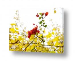 איה אפשטיין איה אפשטיין - צילומי טבע אומנותיים - פרחים | צהוב2