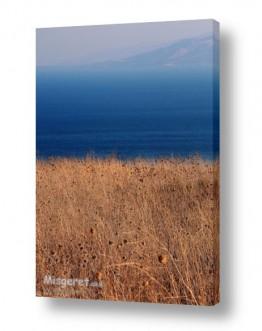 ימים ואגמים בישראל כנרת | קוצים וכנרת