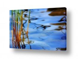 איה אפשטיין איה אפשטיין - צילומי טבע אומנותיים - צמח | פני המים