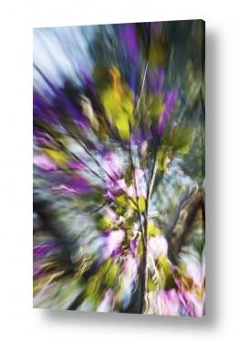 איה אפשטיין איה אפשטיין - צילומי טבע אומנותיים - פרחים | מסיבת צבע #2