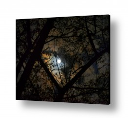 איה אפשטיין איה אפשטיין - צילומי טבע אומנותיים - צמח | שמי ירח