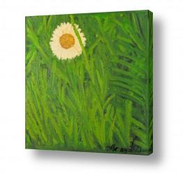ציורים טבע דומם | חרצית בדשא