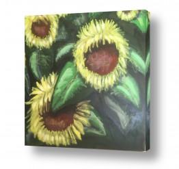 תמונות לפי נושאים פרחי חמניה | חמניות