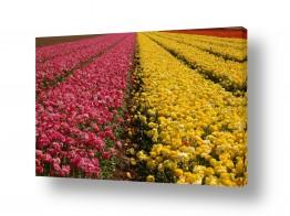 פרחים נורית | רמזור