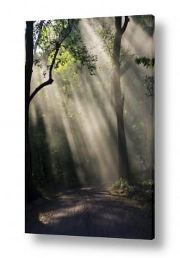 נושאים מזג אויר | אור ביער