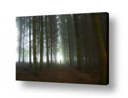 צילומים אייל ברטוב | צל ביער