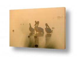 צילומים אייל ברטוב | שקנאים בערפל