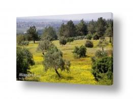ערים בישראל חיפה   צבעי חורף