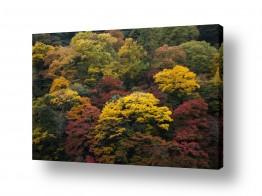 אסיה יפן | צבעי שלכת