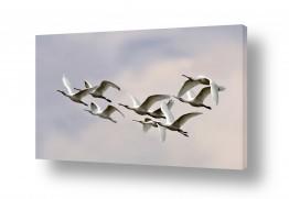 צילומים אייל ברטוב | מעוף כפנים
