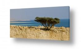 נוף מדבר | לחוף ים המלח