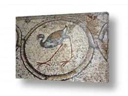 תמונות לפי נושאים דת | פסיפס הציפורים