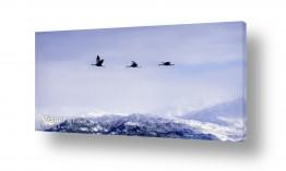 תמונות נופים נוף נוף פנורמי | עגורים מעל חרמון