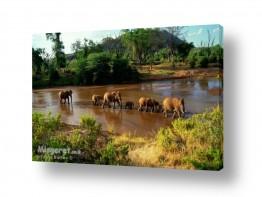 עולם אפריקה | פילים בנהר