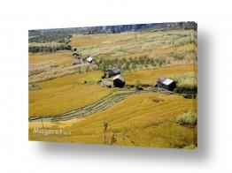 תמונות לפי נושאים ישוב | בקתה בשדה