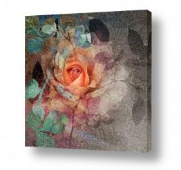 ציורים טבע דומם | Rosy Rose