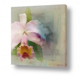 ציורים טבע דומם | Orchid