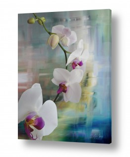 פרחים סחלבים | התעוררות