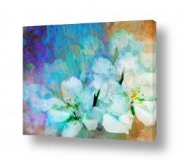 צמחים פרחים | התחדשות