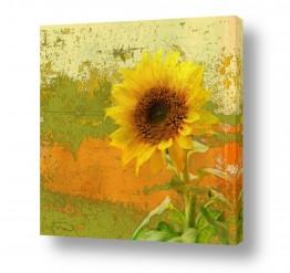 פרחים חמניה | SUNFLOWER