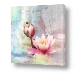 צומח פרחים | שושנת המים