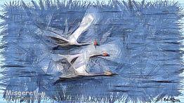 מעוף  עונתי