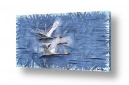 ציורים בעלי חיים | מעוף  עונתי