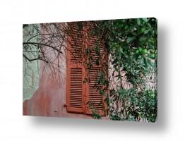 צילומים עירוני | חלון בין העצים