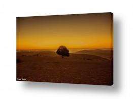 צילומים שמים | עץ בדימדומים