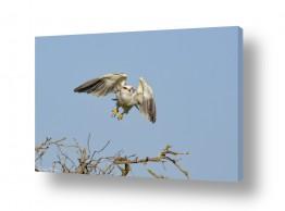תמונות לפי נושאים מעוף | מעוף הדאה