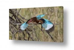 צילומים כרמל תדמור | מעוף השלדג