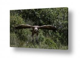 תמונות לפי נושאים שיחים | מעוף הנשר