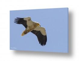 צילומים בעלי חיים | מעוף הרחם