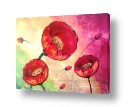 פרחים פרגים   תצ