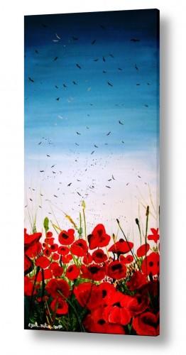 פרחים כלנית | צבע ארגמן