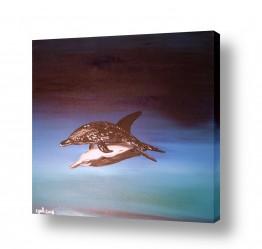 חיות מים דולפין | ליל האהבה