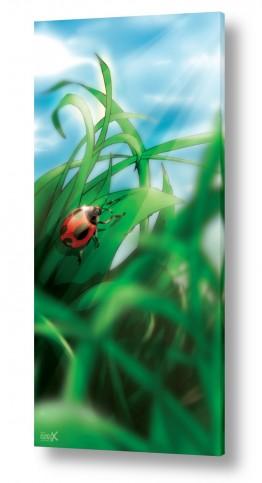 ציורים בעלי חיים | חיפושית פרת משה רבנו