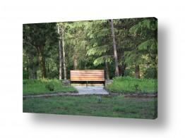 צילומים טבע | ספסל ביער