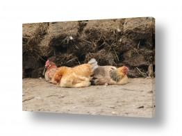 תמונות לפי נושאים חיות | דוגרות