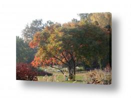 עונות השנה חורף | צבעים