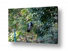 צילומים דן ששתיאל | עומד על הגדר