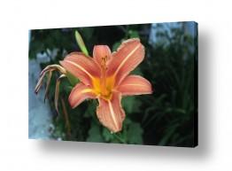 צמחים פרחים | פרח 1