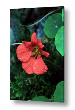 פרחים פרחים בצבעים | פרח 4