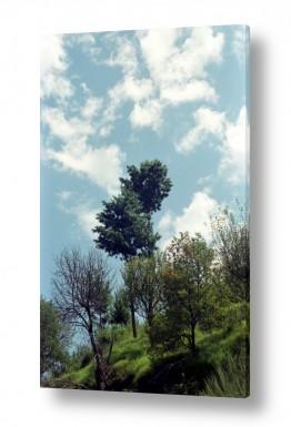 צילומים נוף | עץ אל מול שמיים